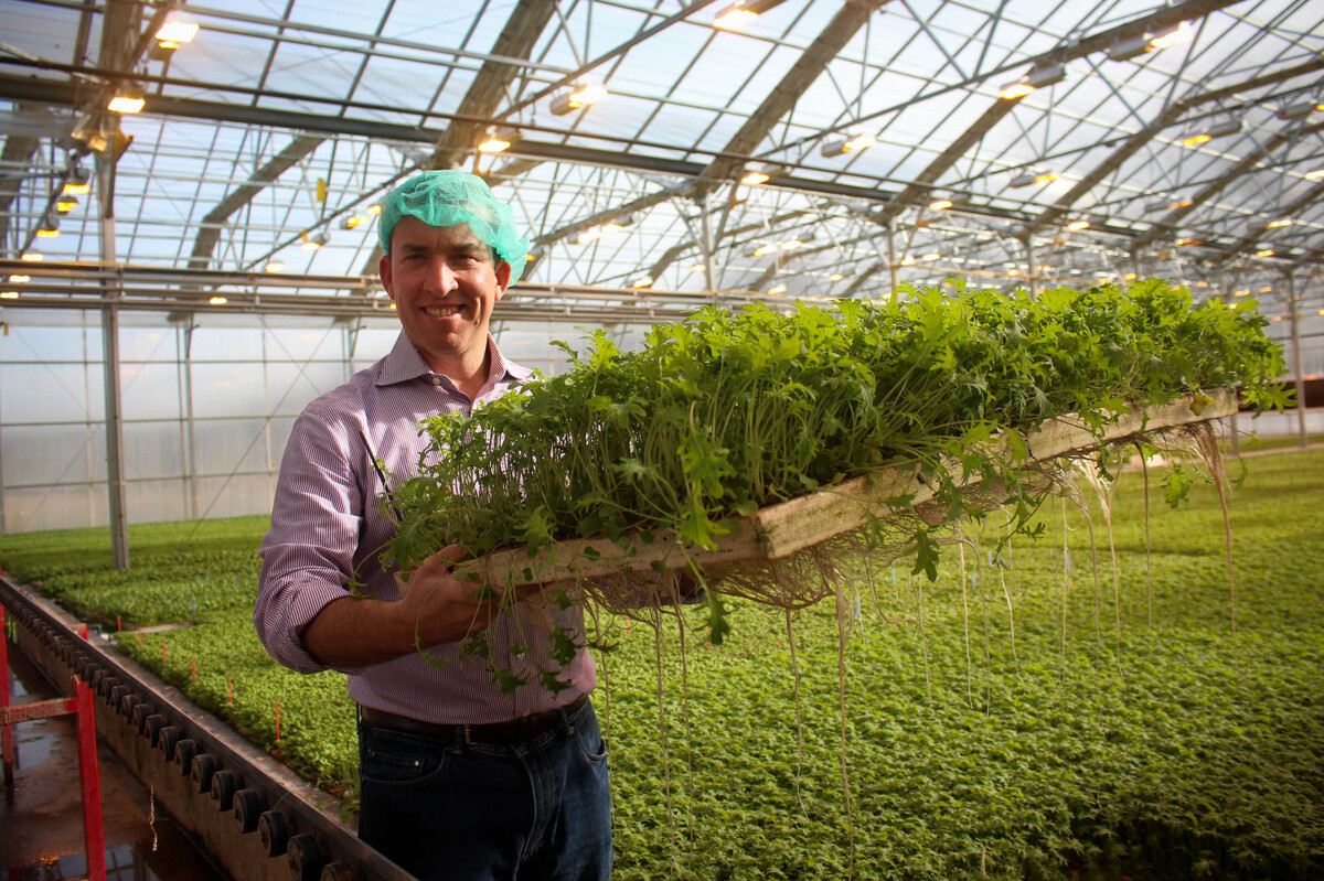 Vegetables under glass greenhouses could bring us better for Better homes and gardens greenhouse