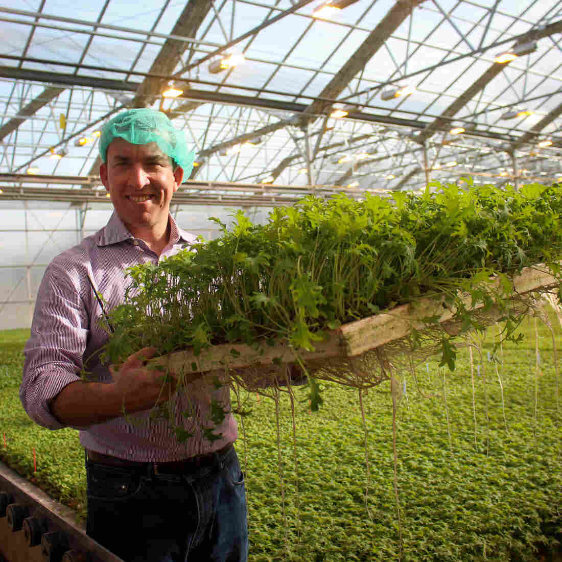 Vegetables Under Glass: Greenhouses Could Bring Us Better Winter Produce
