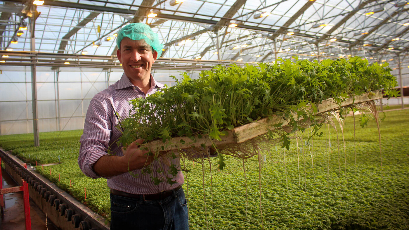 vegetables under glass greenhouses could bring us better winter
