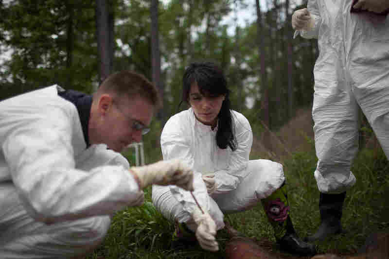 Researchers Sibyl Bucheli (center) and Rob Knight (left) take soil samples from beneath a decomposing body in 2013.