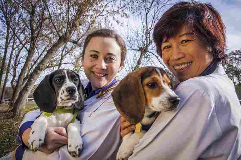 Cornell graduate student Jennifer Nagashima (left), lead author of the paper, and Nucharin Songsasen of the Smithsonian Conservation Biology Institute, co-author of the paper, hold two of the IMF puppies born this summer.