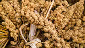 "Millet isn't just one grain but, rather, a ragbag group of small-seeded grasses. Hardy, gluten-free and nutritious, millet has become an ""it"" grain in recent years."