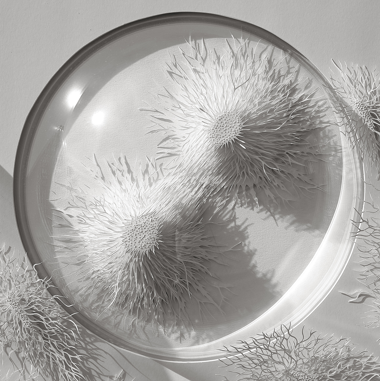 Is This A Snowy Wonderland Or The World Inside A Petri Dish?