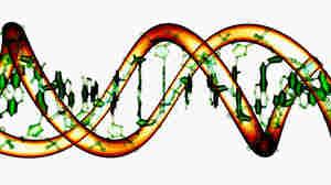 Editing DNA has never been easier.
