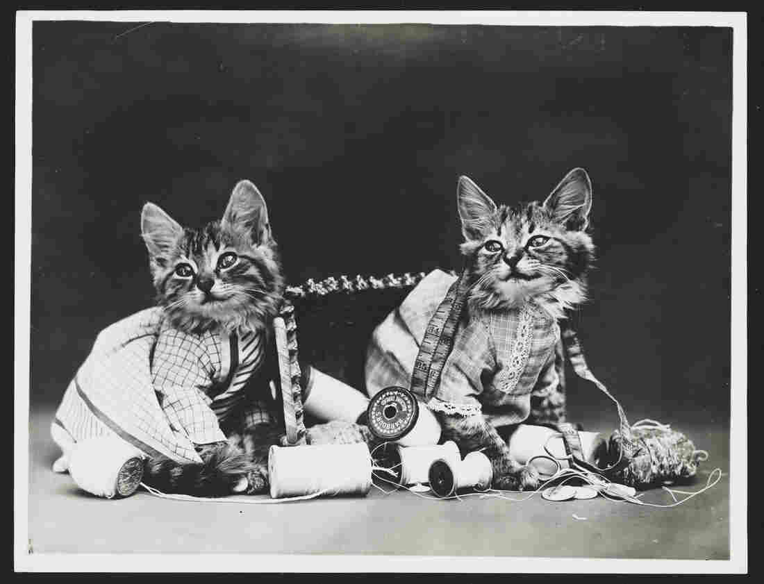 """""""Mischief Makers,"""" 1915"""