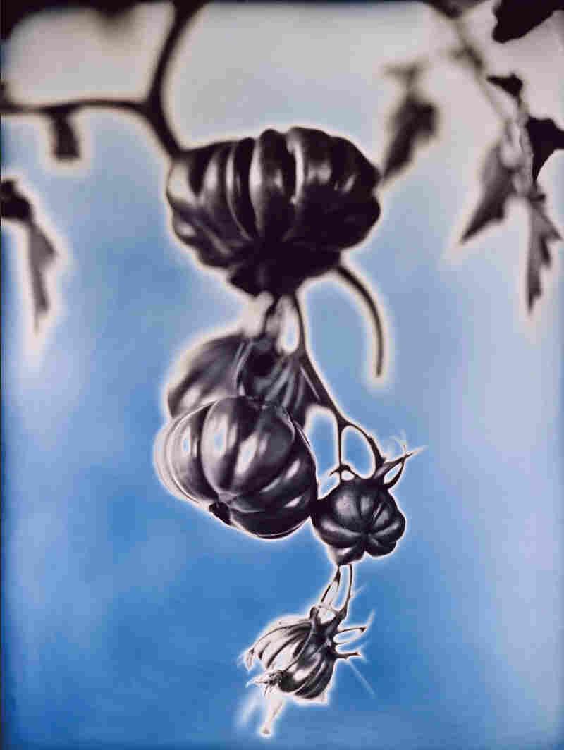 Zapotec Tomatoes