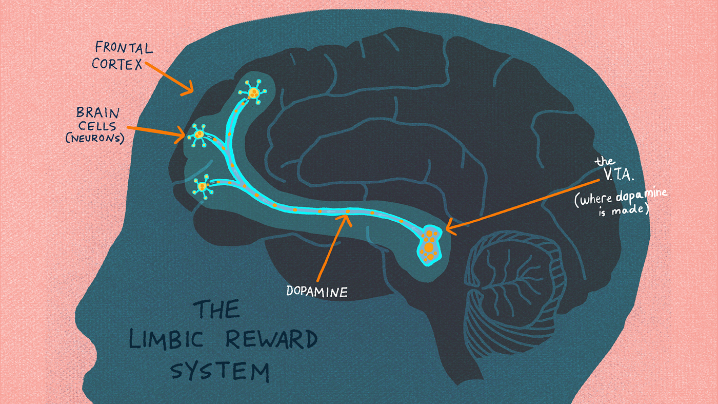 Anatomy Of Addiction: How Heroin And Opioids Hijack The Brain ...