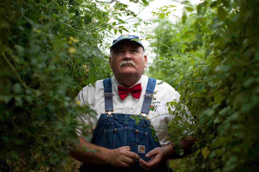 Farmer Lee Jones inside a tomato greenhouse on his farm in Huron, Ohio.