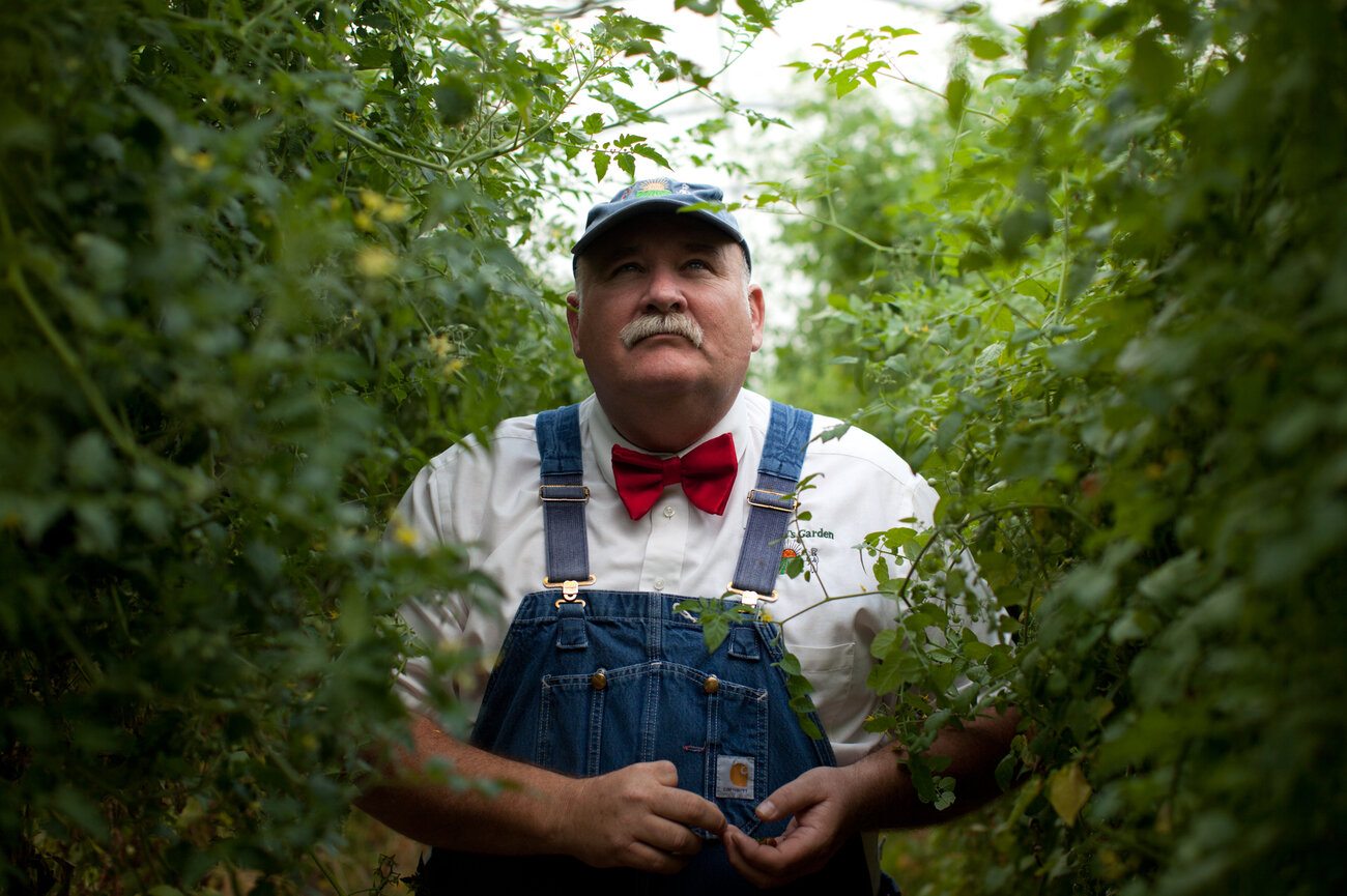 Farmer Lee Jones inside a tomato greenhouse on his farm in Huron, Ohio. (Ryan Kellman/NPR)