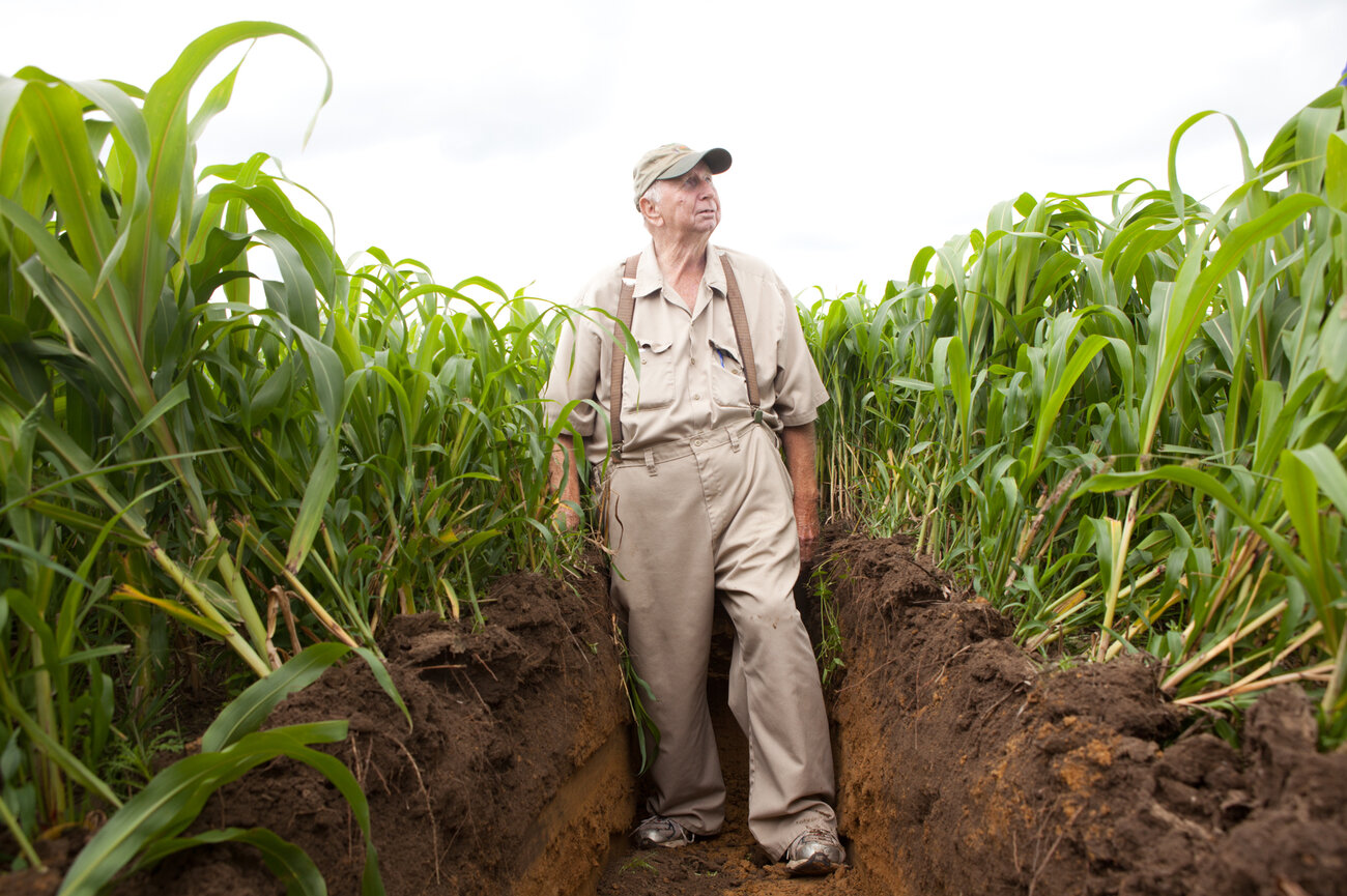 Bob Jones Senior in a field of Sudan grass that's been planted as a cover crop. Underneath is about a foot of topsoil that he's built up over the years. (Ryan Kellman/NPR)