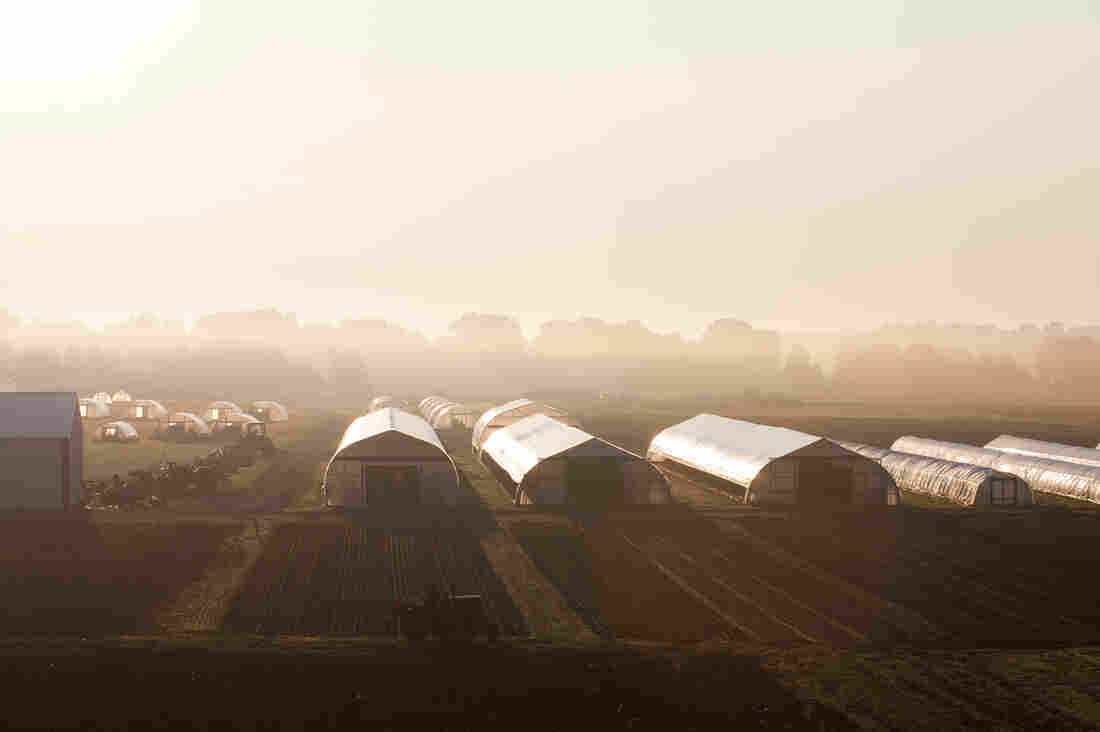 The farm covers 300 acres and supplies chefs all year round, with the help of greenhouses and hoop houses that can be moved from plot to plot in the winter.