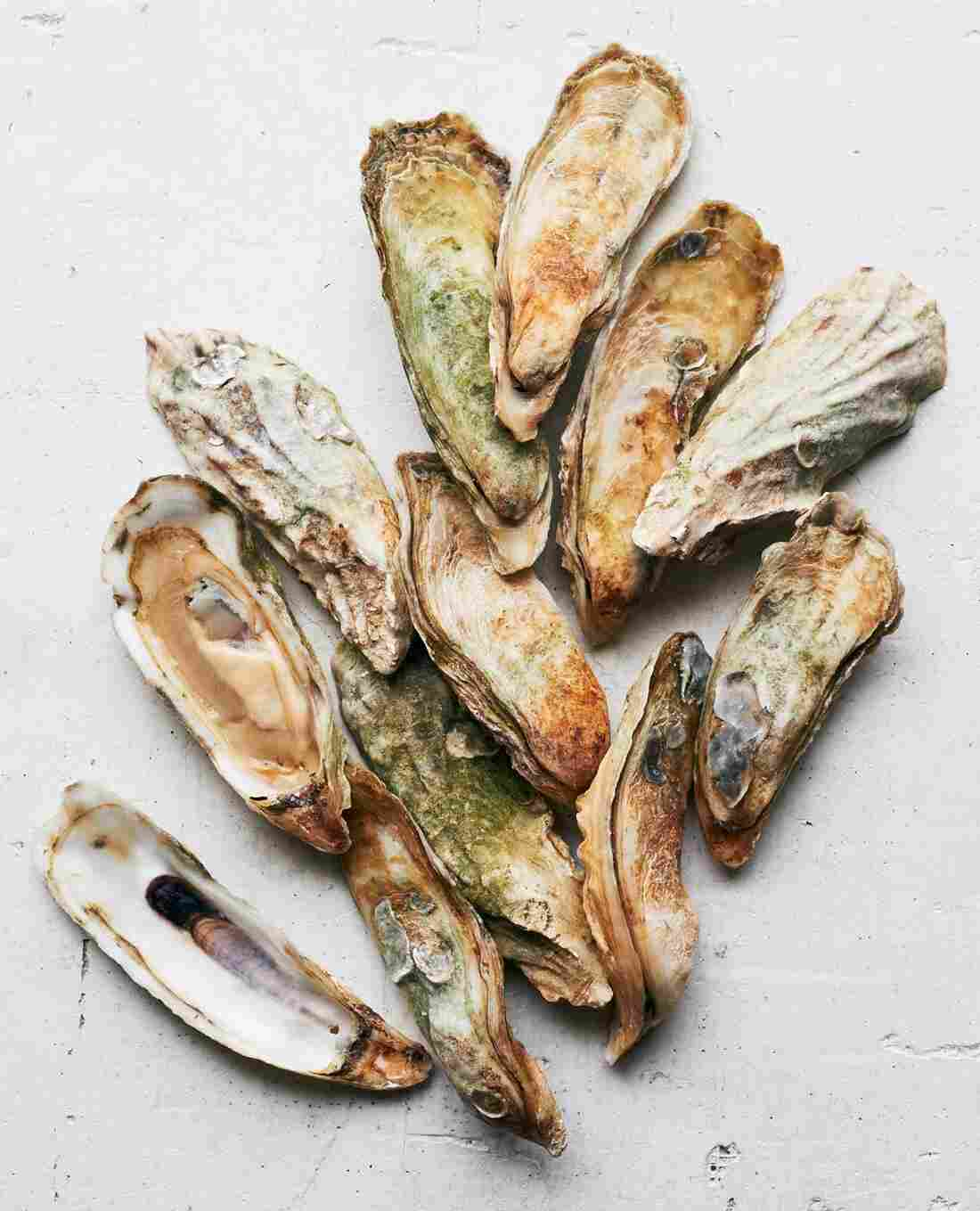 "Capers Blades ""singles on a half shell"" oysters grown by farmer Dave Belanger (aka Clammer Dave) in Capers Inlet, S.C."