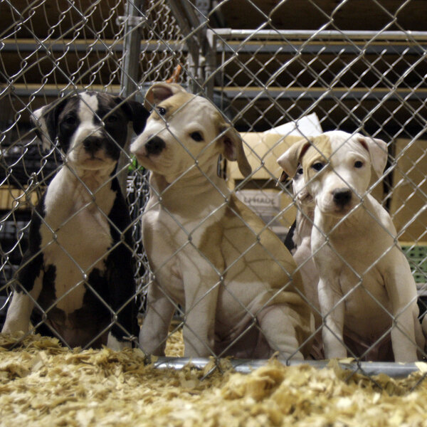 Along With Assault And Arson, FBI Starts To Track Animal Abuse