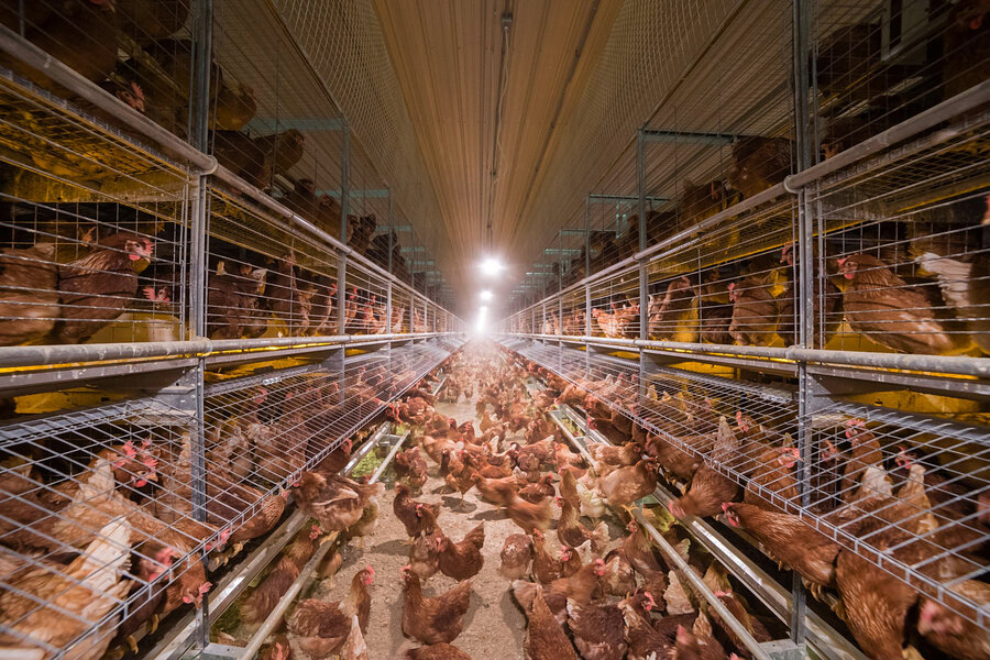 Marvelous Most U S Egg Producers Are Now Choosing Cage Free Houses The Inspirational Interior Design Netriciaus