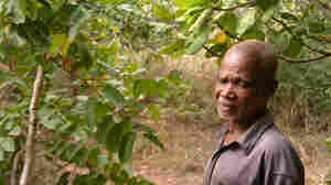 The Story Behind The River Blindness Story: Itching, Weeding, Snipping