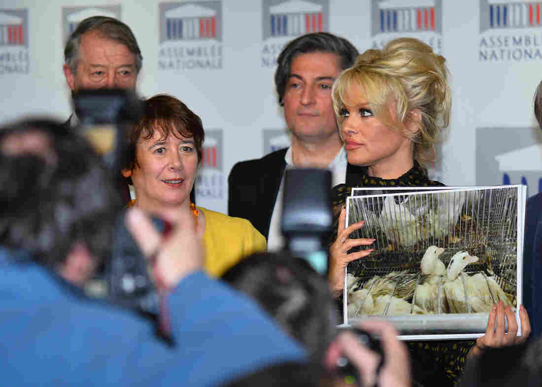 Former Baywatch star Pamela Anderson (right) holds a news conference in Paris on Tuesday against the production of foie gras.