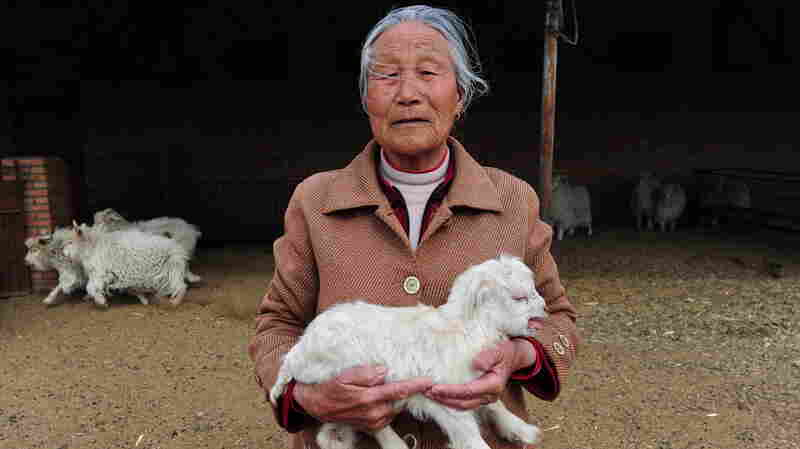 Chinese folk wisdom says that monkeys are cuter than goats, but this photo of a Chinese goat would seem to prove that the opposite is true.
