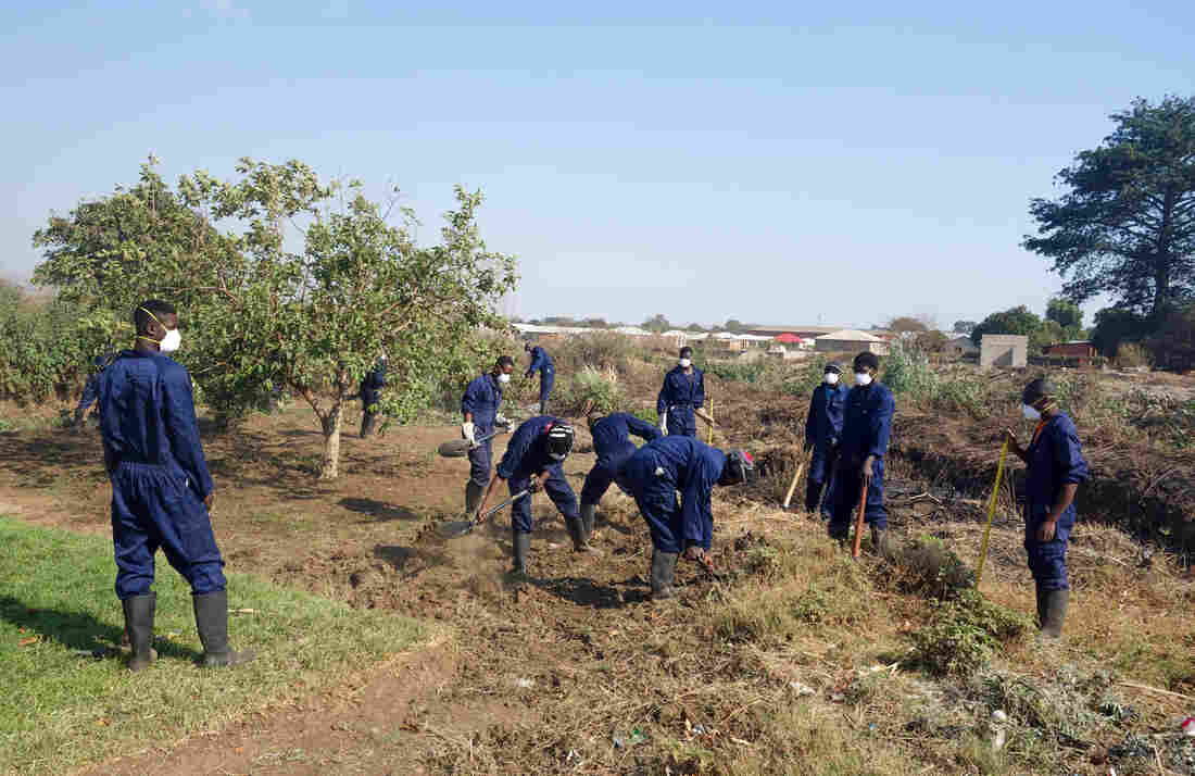 Local crews work to clean up lead-laden soil in the Zambian town of Kabwe.