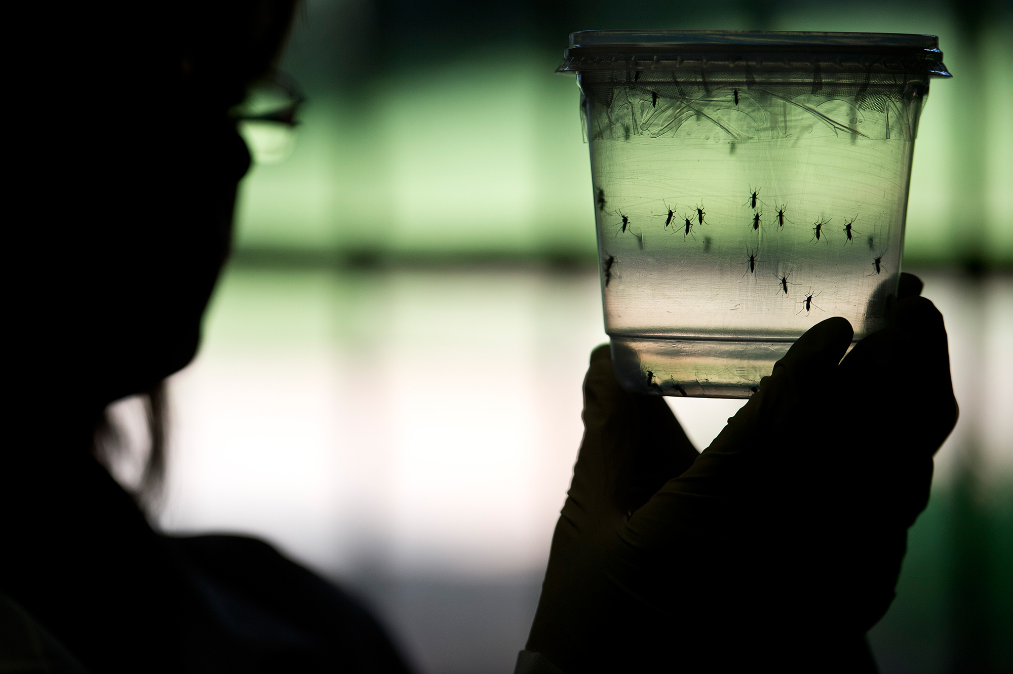 Virginia resident tests positive for Zika virus