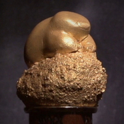 The Golden Mole Award For Accidental Brilliance Trophy
