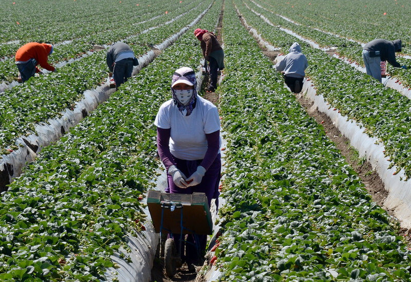 Image result for california, farm workers, photos