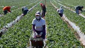Activists Demand A Bill Of Rights For California Farm Workers