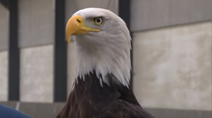 Rogue Drones? Unleash The Eagles