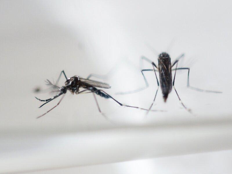 Texas zika sexually transmitted