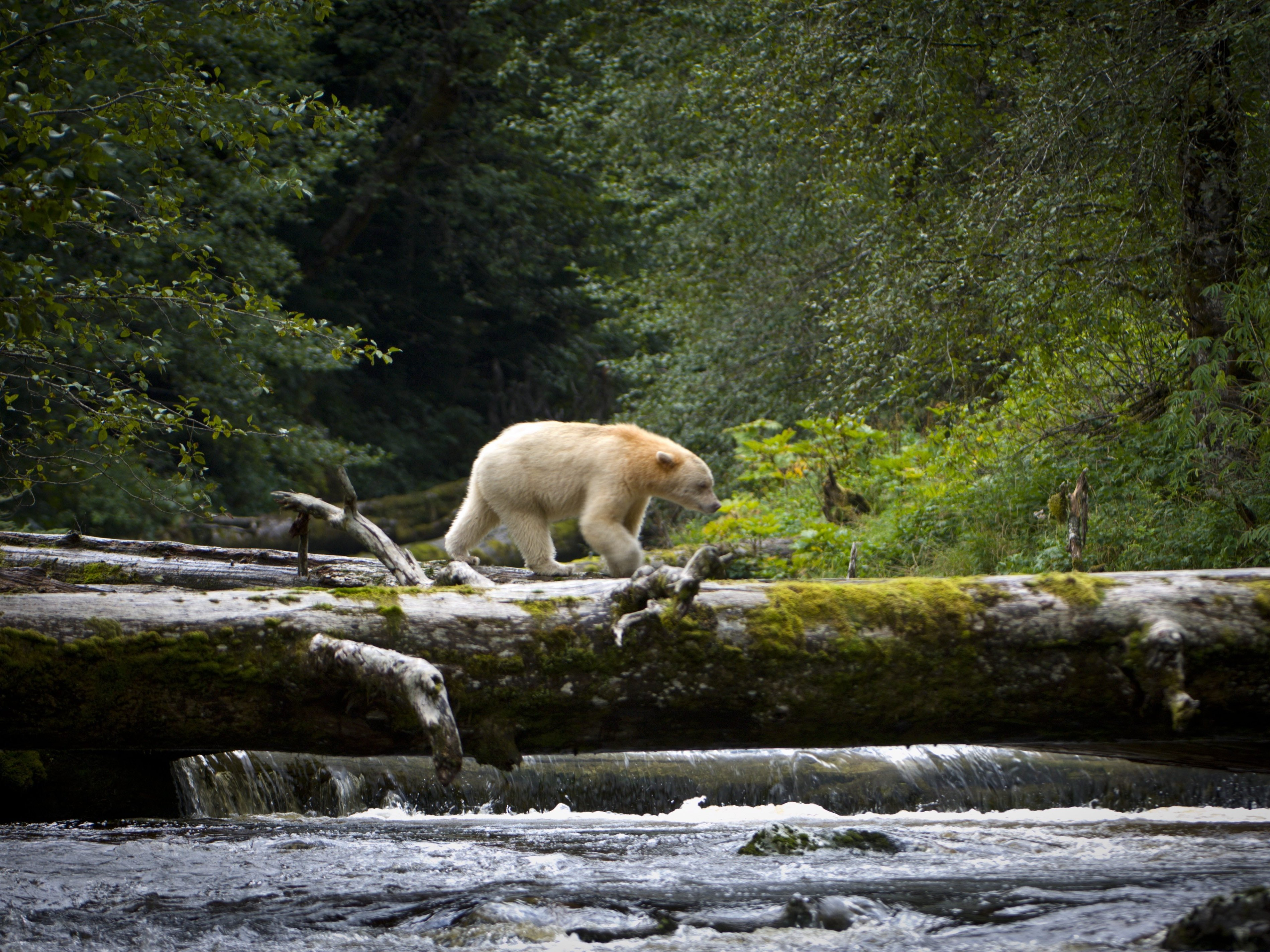 Landmark Deal Protects Over 9 Million Acres Of Canadian Rain Forest
