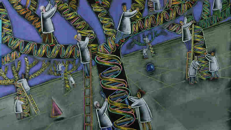 Scientists have the ability to use DNA from three adults to make one embryo. But should they?