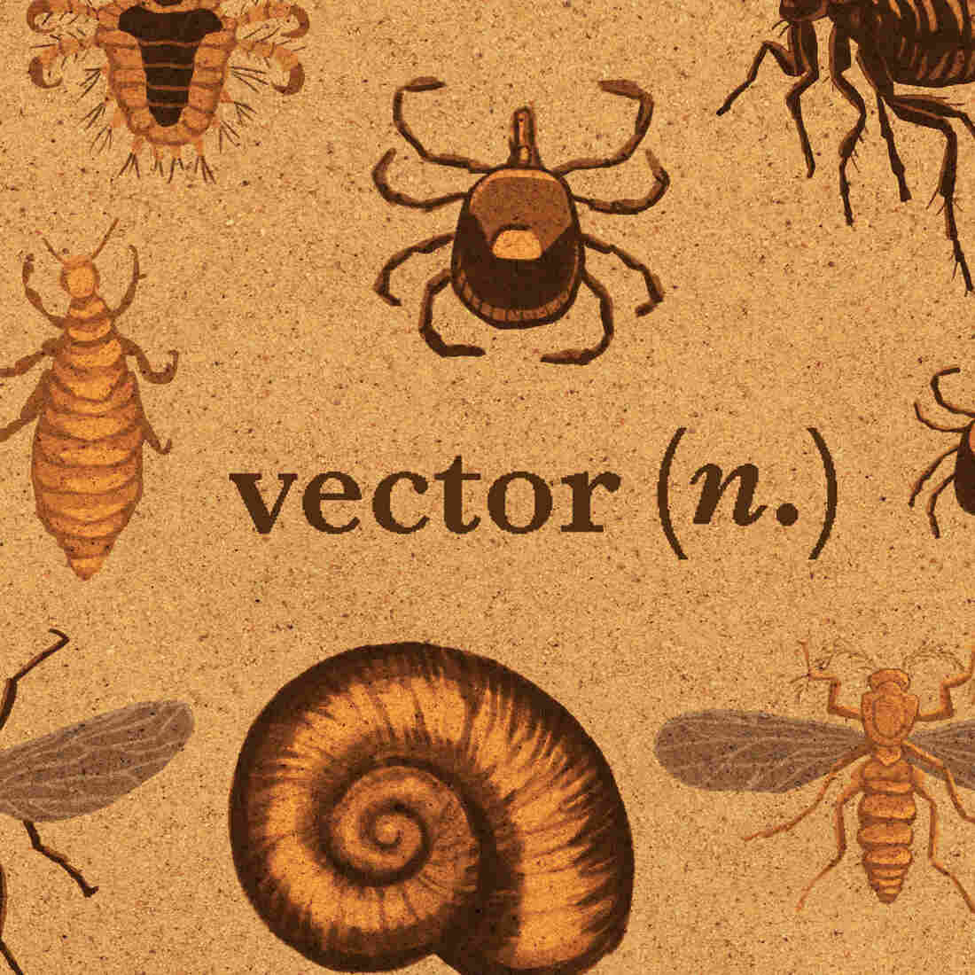 Do You Know What 'Vector' And 'Endemic' Mean? We Can Help — Sort Of