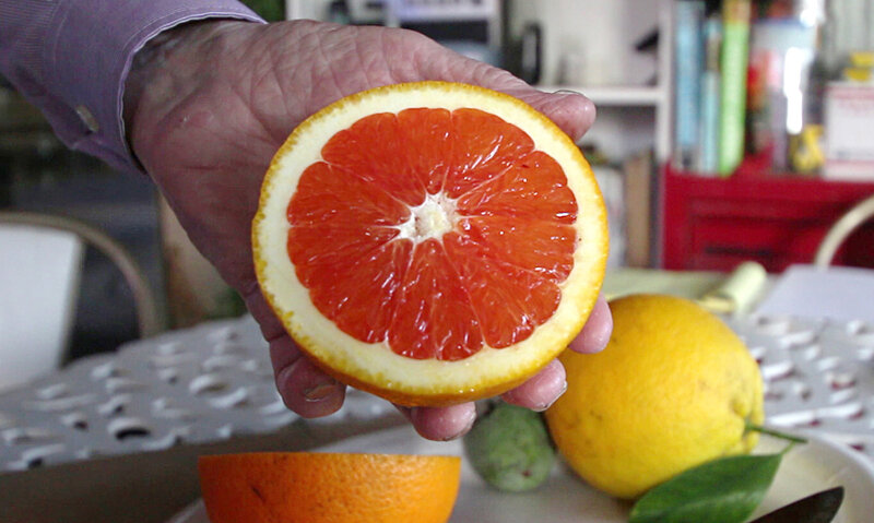 Citrus In The Snow Geothermal Greenhouses Grow Local Produce In