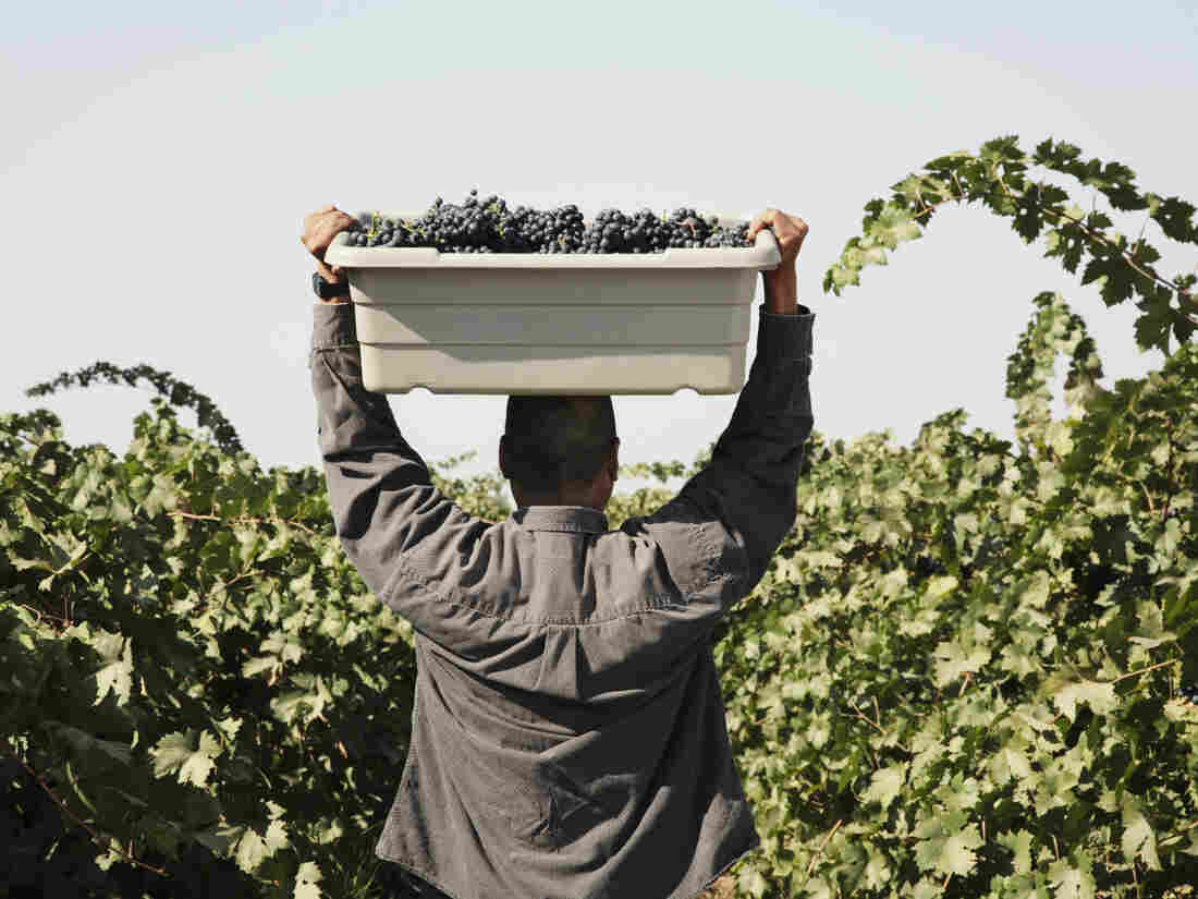 Contractors who supply workers to farmers say requirements of the Affordable Care Act and the immigration status of many of the workers create a Catch-22.