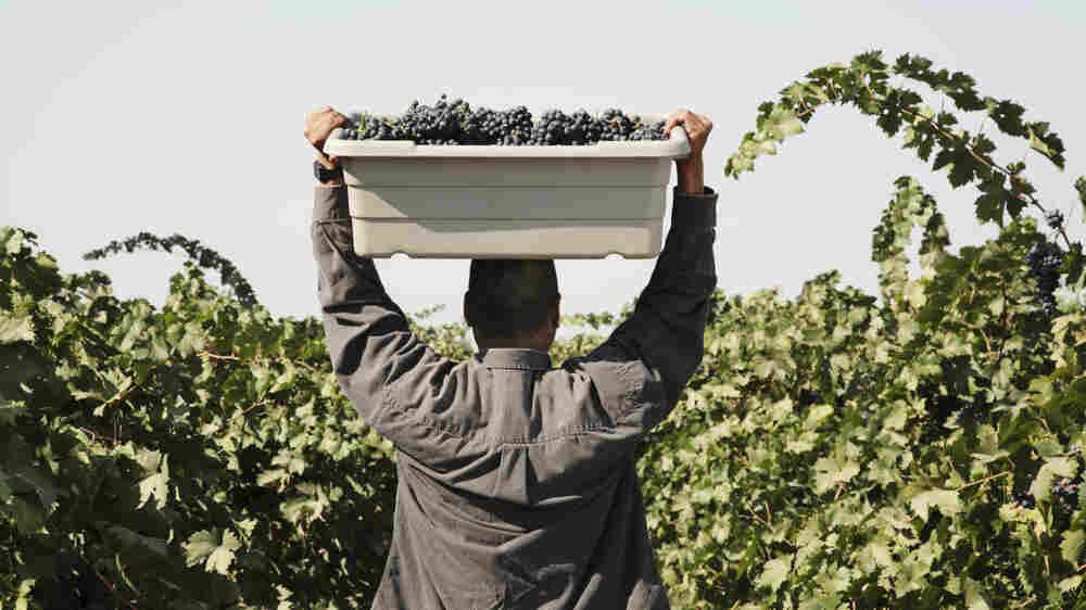 Farm Contractors Balk At Obamacare Requirements