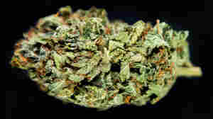 The psychoactive ingredient in marijuana is a fat-soluble compound called THC.