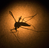 While some scientists seek ways to stop the spread of Zika by mosquitoes, others have received new funding from the National Institutes of Health to track the genes and habits of the virus itself.