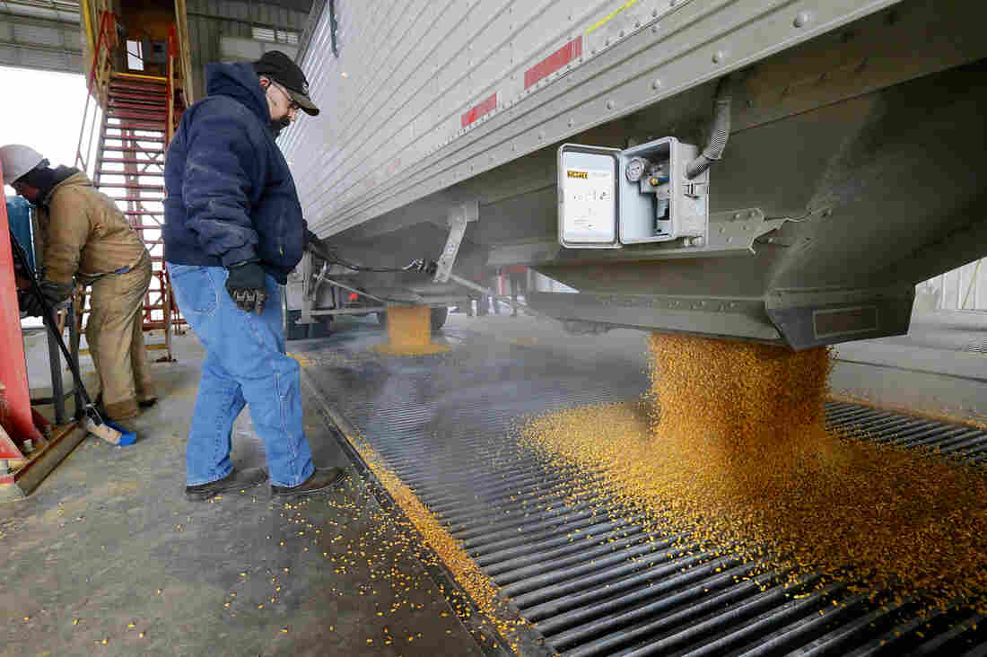 Corn is delivered to the Green Plains ethanol plant in Shenandoah, Iowa.