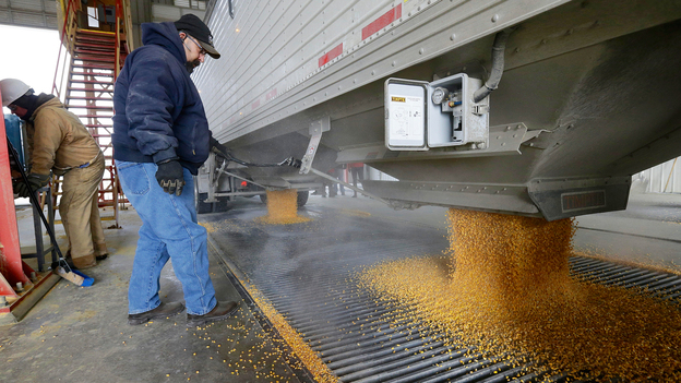 Corn is delivered to the Green Plains ethanol plant in Shenandoah, Iowa. (AP)