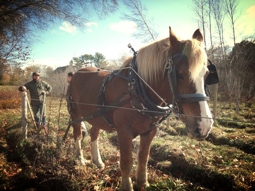 """Oyster River Winegrowers is a """"horse-powered vineyard"""" in Maine. Founder Brian Smith calls his natural wine a """"pre-industrial wine."""""""