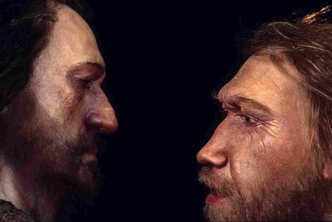 ... Clues To Human Health In Neanderthal DNA : Shots - Health News : NPR