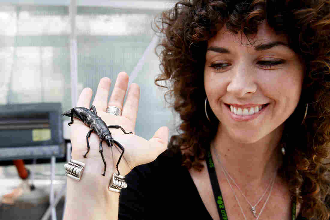 Paige Howorth, the San Diego Zoo's curator of entomology, with an adult D. australis.