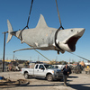 "Workers ""sling"" the last remaining shark cast from the original JAWS mold and lift him, by crane, to a nearby crate. After spending more than 25 years at a Los Angeles junkyard, ""Bruce"" is headed for a museum."