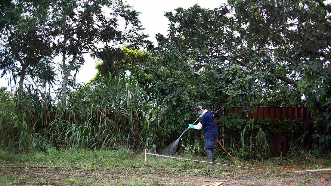 Stephen Jenner, from the Florida Department of Agriculture and Consumer Services, sprays an insecticide under an avocado tree where some Oriental fruit flies were found on September 9, 2015 in Homestead, Fla. After months fighting a fruit fly infestation, Florida has declared the insect has been eradicated.