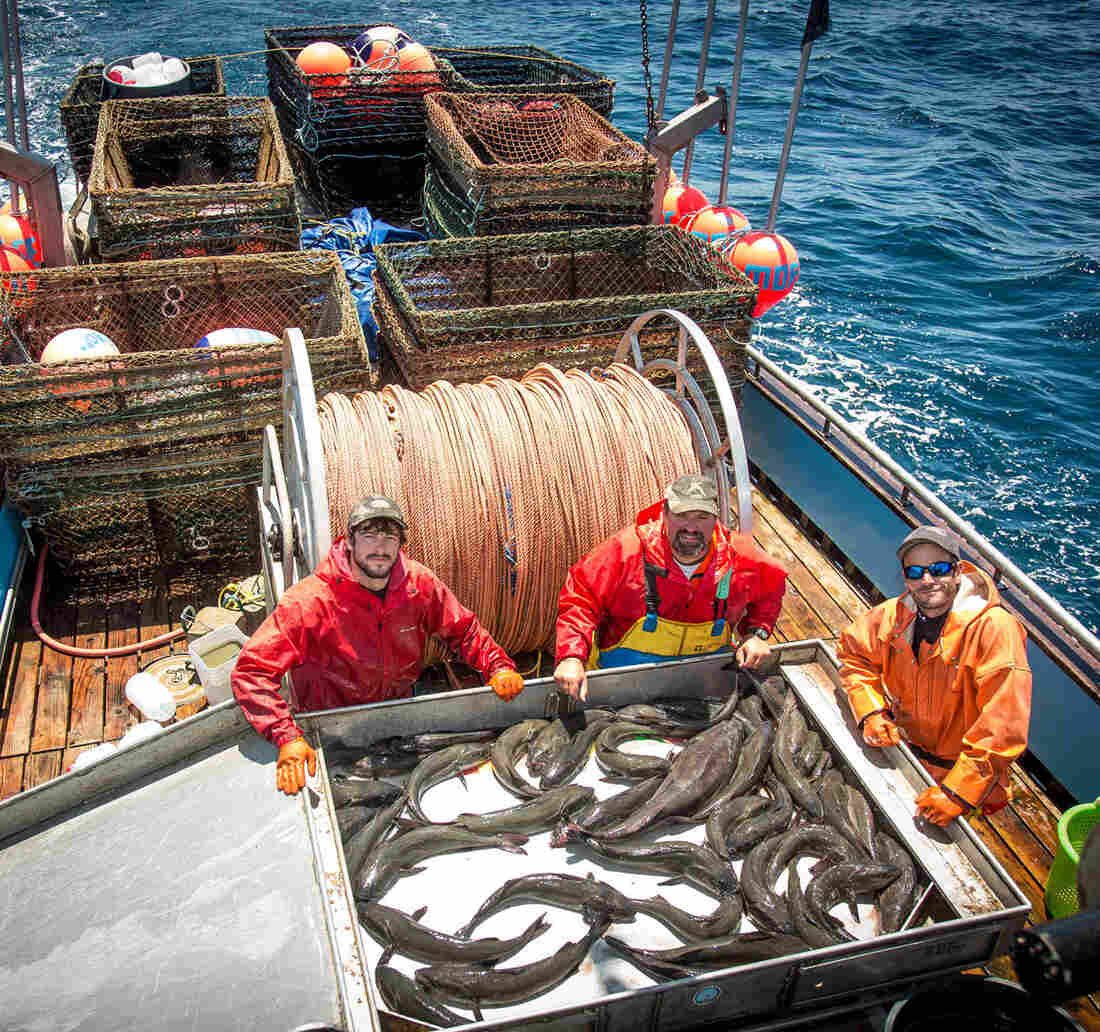 The captain and crew of the Moriah Lee pose with sablefish caught off the coast of Half Moon Bay, Calif. A new study found that fishermen in the West Coast sablefishery were much less likely to engage in risky behavior — like sailing out in stormy weather — after catch share quotas were implemented.