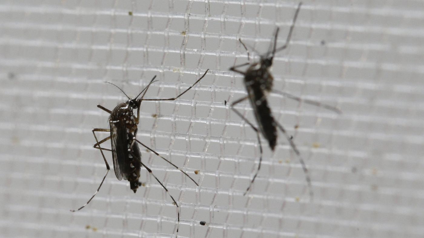 American Samoa Says It Has 205 Suspected Cases Of Zika