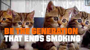 Can Smoking Kill Cat Videos? A Bold Public Health Ad Says Yes