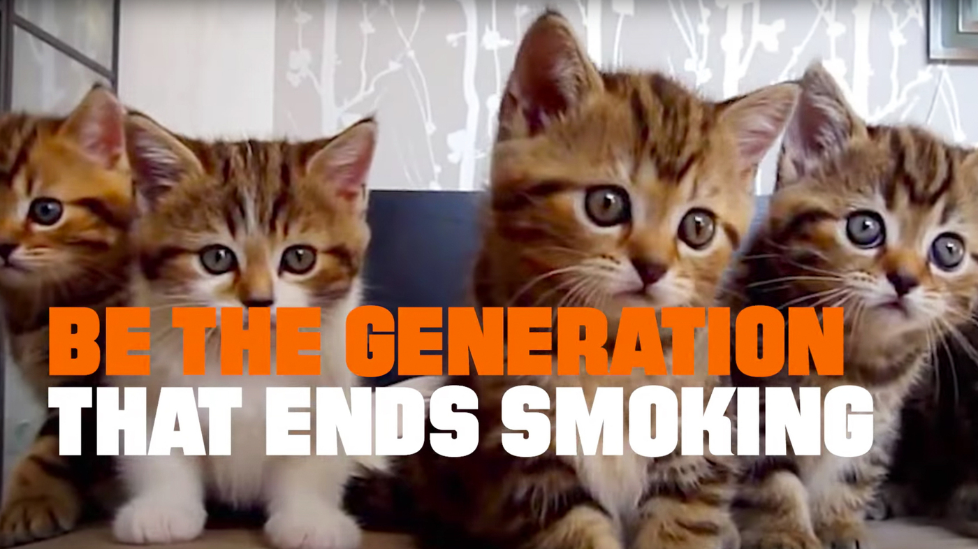 Can Smoking Kill Cat Videos A Bold Public Health Ad Says Yes