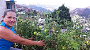 Facing Severe Food Shortages, Venezuela Pushes Urban Gardens
