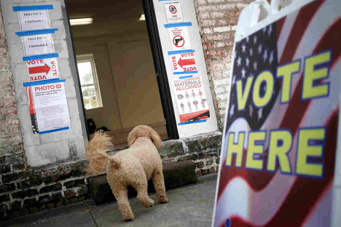 A dog enters a polling station as residents vote in the South Carolina Republican presidential primary in Charleston, S.C.