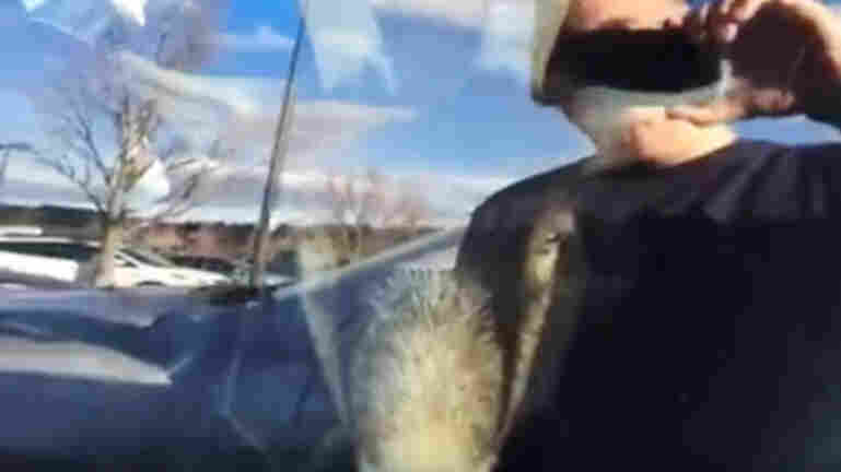 A goat locked in a car in a Massachusetts parking lot got its moment of YouTube fame courtesy of a passerby's video.